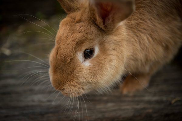 List of All The Important Things That You Need To Know About Rabbits