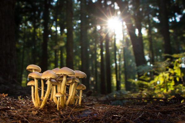 Interesting Information About Magic Mushrooms